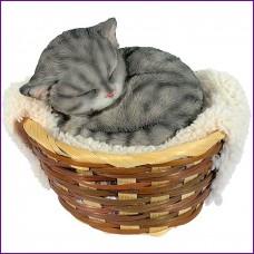 Kitten in mandje